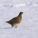冬 画像3